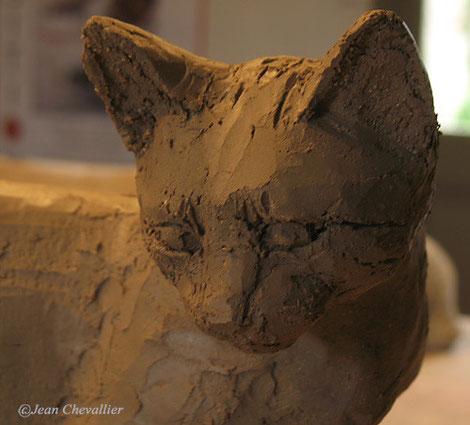 Chat sauvage, détail. terre Jean Chevallier