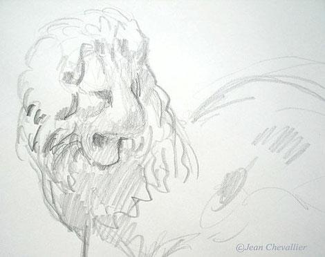 Lion, Aphrodisias Croquis Jean Chevallier