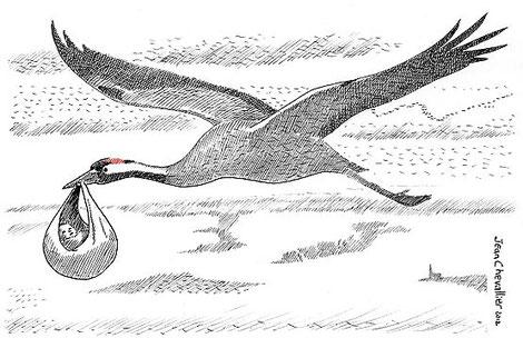 grue-cigogne ciconiagrus dessin JChevallier