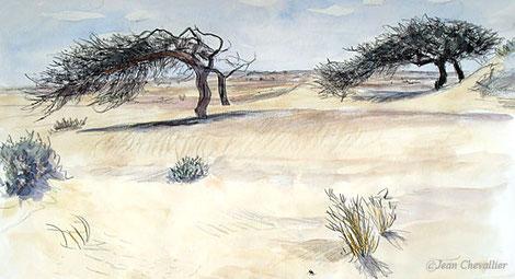 Acacias, route d'Aoussert, aquarelle Jean Chevallier
