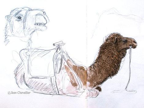 Chameau (dromadaire) sellé, aquarelle Jean Chevallier