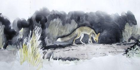 Renard famélique (Vulpes rueppelli), aquarelle Jean Chevallier