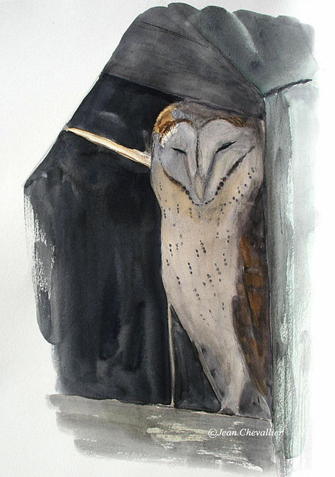 Effraie (tyto alba), aquarelle jean Chevallier