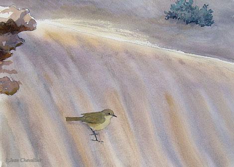 Pouillot véloce Phylloscopus collybita, aquarelle Jean Chevallier