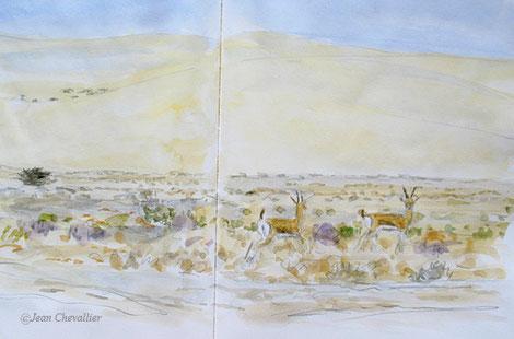 Gazelles dorcas, aquarelle Jean Chevallier