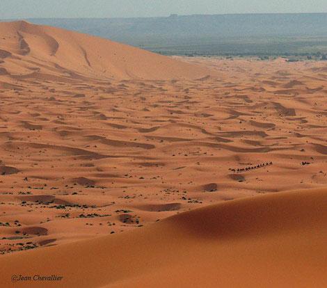 Merzouga, Erg Chebbi. Une petite colonne de chameaux, qui ne ramène pas le sel du Niger mais un groupe de touristes de tous pays, en visite éclair, organisée depuis Marrakech...
