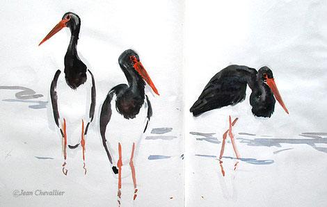 Cigognes noires, ciconia nigra, aquarelle Jean Chevallier