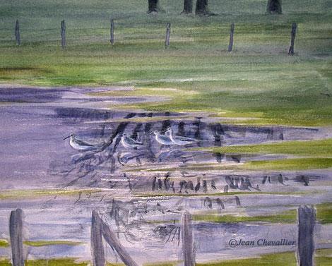 Chevalier arlequins (Tringa erytropus) aquarelle Jean Chevallier