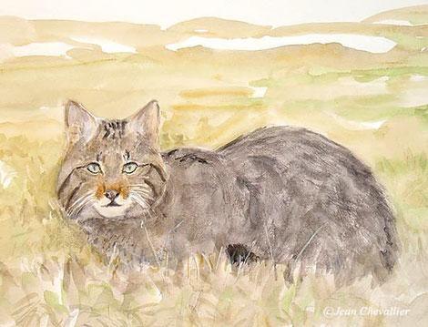 chat forestier , Jean Chevallier 1013