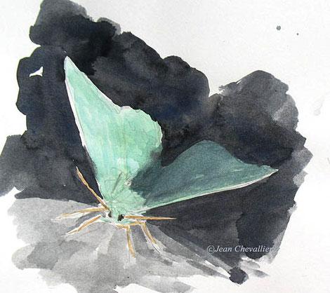 geometra papilionaria aquarelle Jean Chevallier