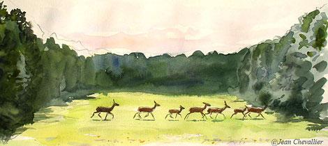 Biches et cerfs, aquarelle Jean Chevallier
