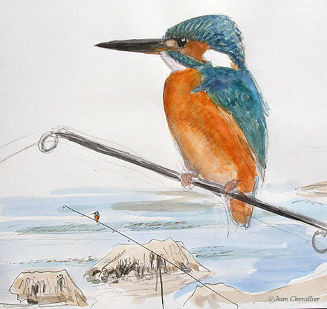 Martin pêcheur (Alcedo Athis), sur sa canne. Aquarelle Jean Chevallier