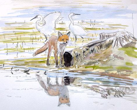 renard et aigrettes garzettes, aquarelle Jean Chevallier