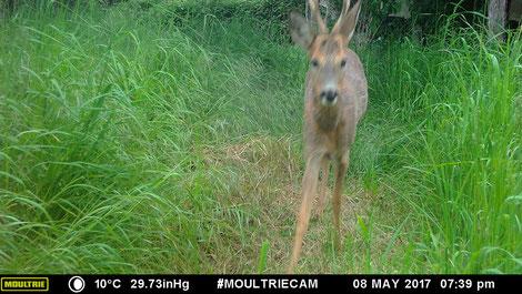 En mode photo, (photo réduite ici), la qualité est agréable. Mais l'animal , qui bouge, est flou.