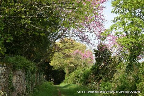 Chemin de randonnée, de Brice, Cénac