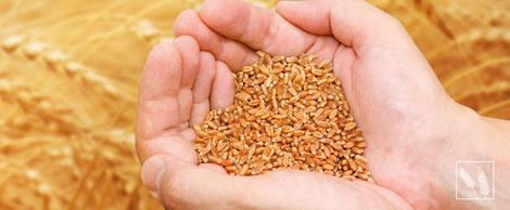 TGB Steuerberatung für landwirtschaftliche Kunden