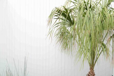 タイマッサージスタジオ コタオのヤシの木