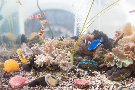 2枚貝も元気、アワビも元気な活魚もOK!水換え不要の水槽です。