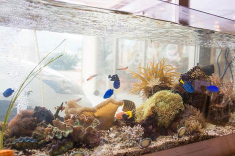 ナンヨウハギやいろんな魚が泳ぐ水換え不要の水槽。
