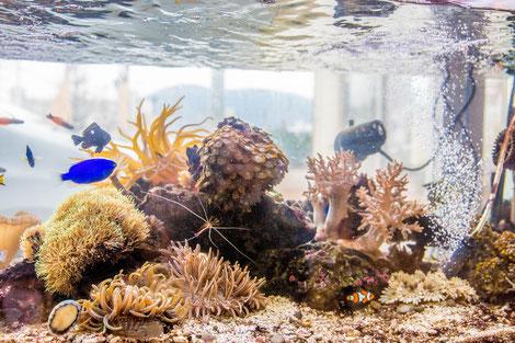 濾過装置、水換え無しで美しい海水魚水槽