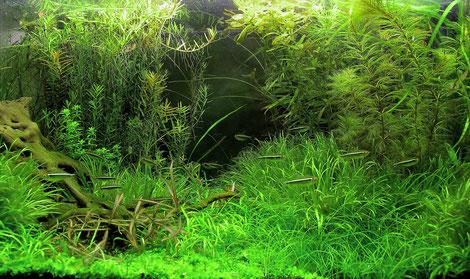 西宮市の個人様「海水魚水槽・サンゴ水槽」水槽メンテナンス