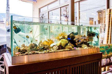 京都に設置した海水魚水槽