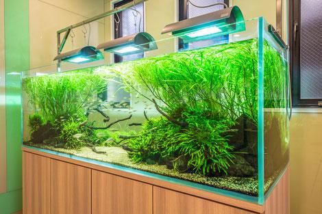 大阪市の企業様「ネイチャーアクアリウム水槽」水槽メンテナンス