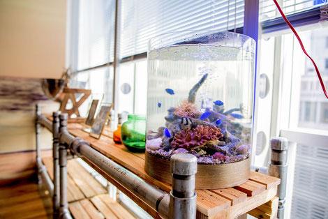 西海岸テイストの空間に設置した海水魚水槽