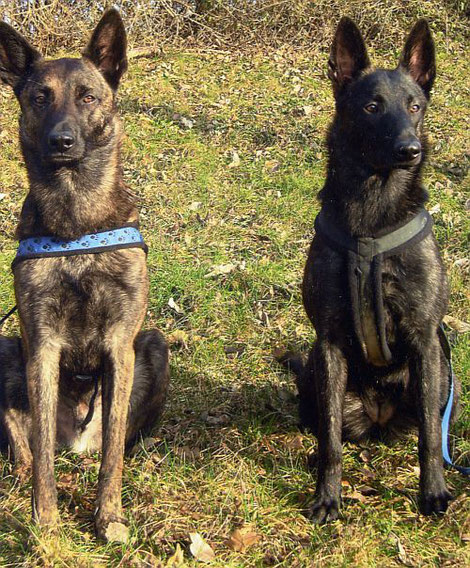 Zwei tolle Holländer die bei Familie Günther bei München leben!  Links: Jack Boyd's Bullriding Come Back Jack  Rechts: Cosma Cosma vom Torfmoorsee