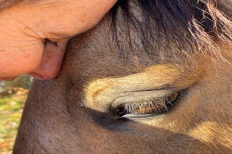 Ateliers aromathérapie et d'herboristerie chez Divine Alchemille en Pays de Cocagne