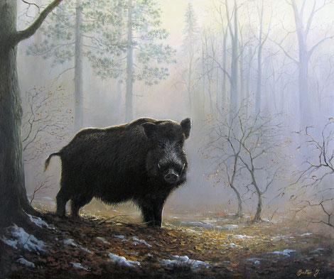 Wildeber