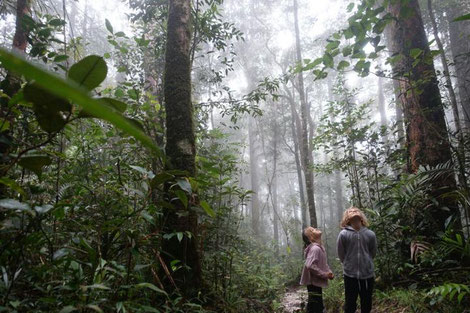Kinder im Regenwald