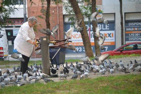 Eine alte Dame füttert die Tauben