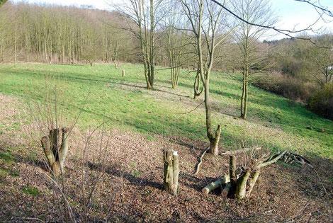 (c) Andreas Koch geeignete Bäume