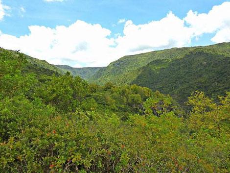 Black River Georges  Nationalpark Mauritius
