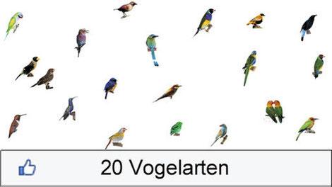 Vogelgraphik Monokultur