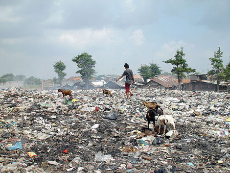 Müllhalde mit Kindern und Tieren