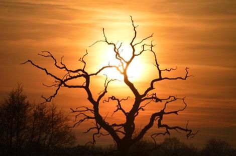 Baum im Abendrot