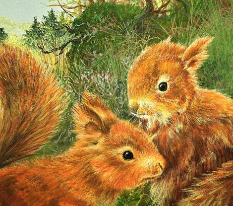 Zeichnung Eichhörnchen