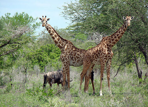 Selous Game Reserve Wikipedia
