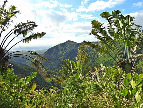Black RiverGeorges  Nationalpark Mauritius