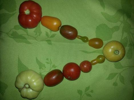 V aus Tomaten
