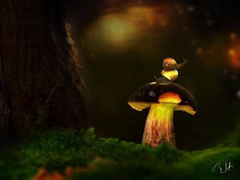 Schnecken auf Pilz