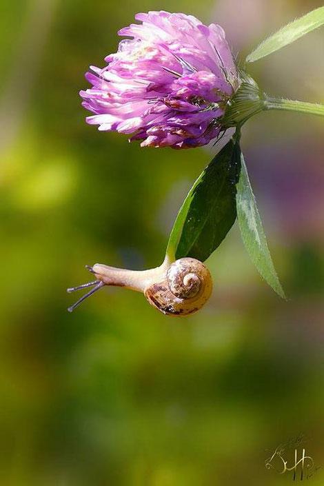 Schnecke an Blüte