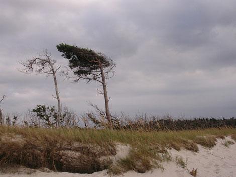 Naturwelt, Meer