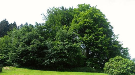 (Britta Eßers)Die geretteteten Bäume