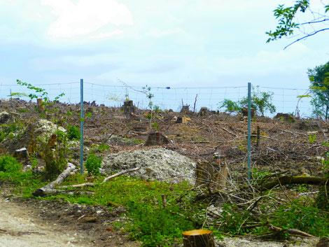 Zerstörungen am Teutoburger Wald