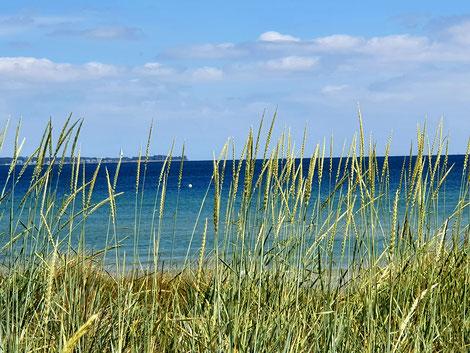 Strand mit Strandseggen