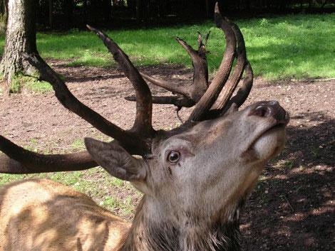 Natur, gegen die Jagd