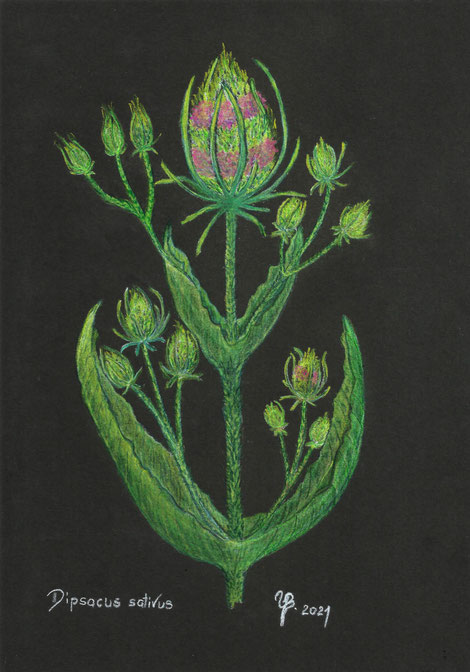 Zeichnung mit Pastellkreide von Ulrike Beschow